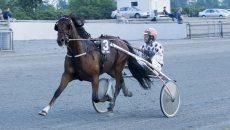 Hesten VM Viking Cup er en af favoritterne ved onsdagens løb i Billund. Foto: Billund Trav